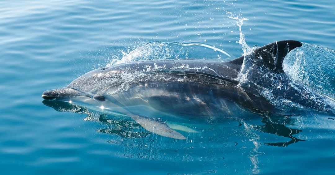 black dolphin in body of water never swim with dolphins