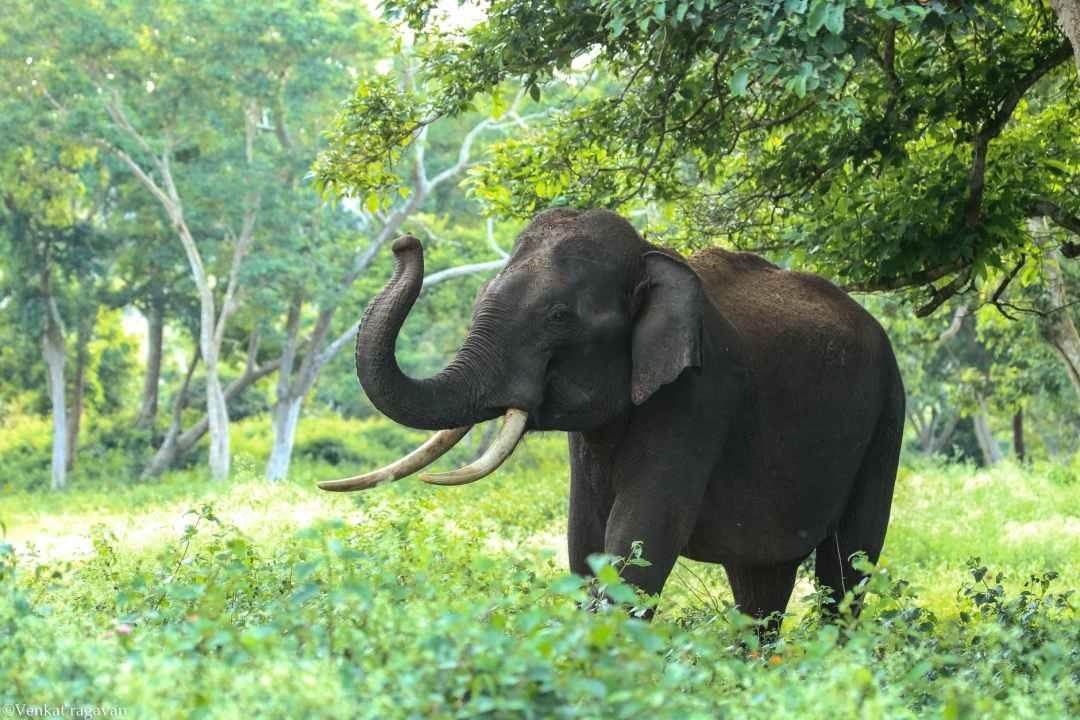 black elephant near trees ethical elephant sanctuaries in Thailand