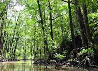 jungle rivier