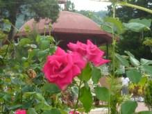 Rosas de Alegría