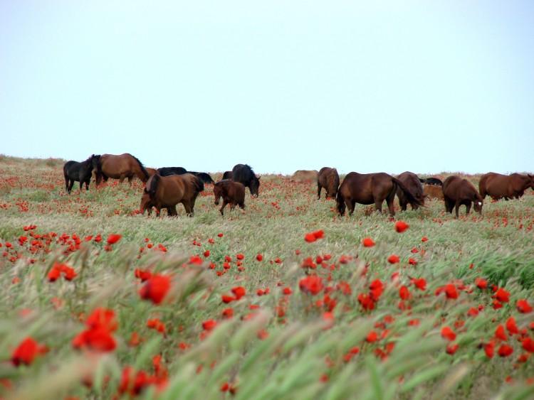 Les chevaux célestes de l'Ouzbékistan © Doca Tours