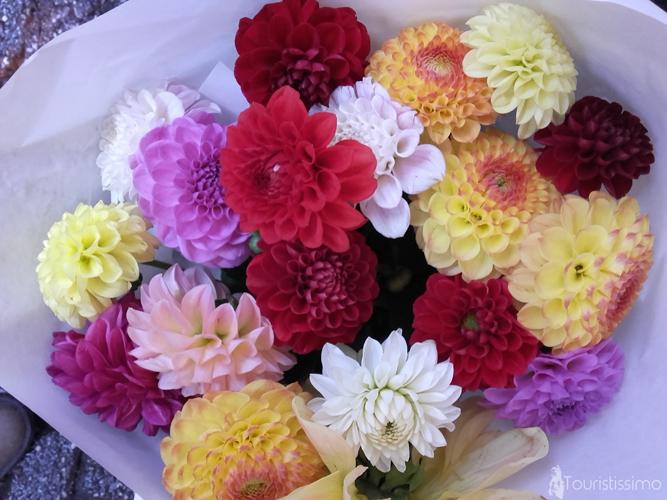 Les fleurs d'Amsterdam