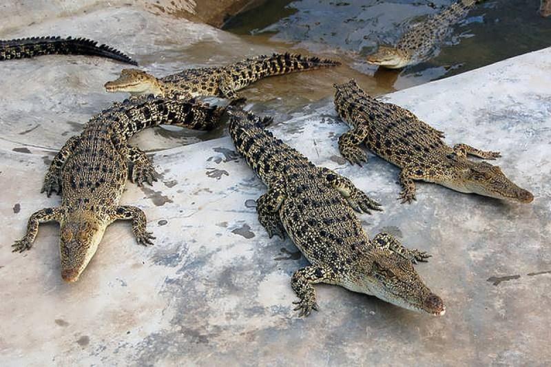 Davao City Crocodile Park