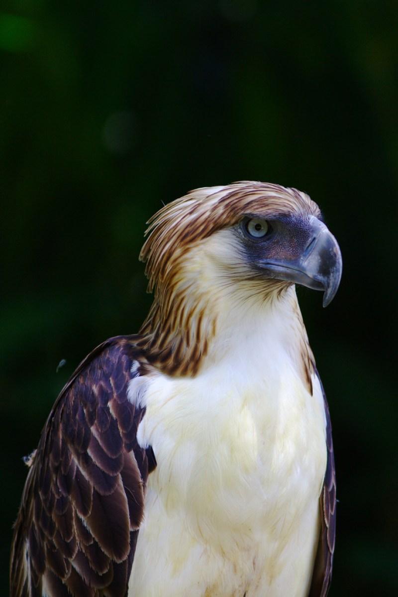 Davao City Philippine Eagle Center