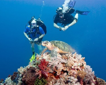 Tubbataha Reef - Top 10 Tourist Spots in Palawan