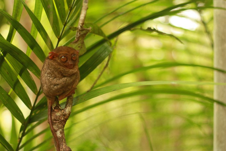 Tourist Spots in Bohol Philippine Tarsier and Wildlife Sanctuary Bohol