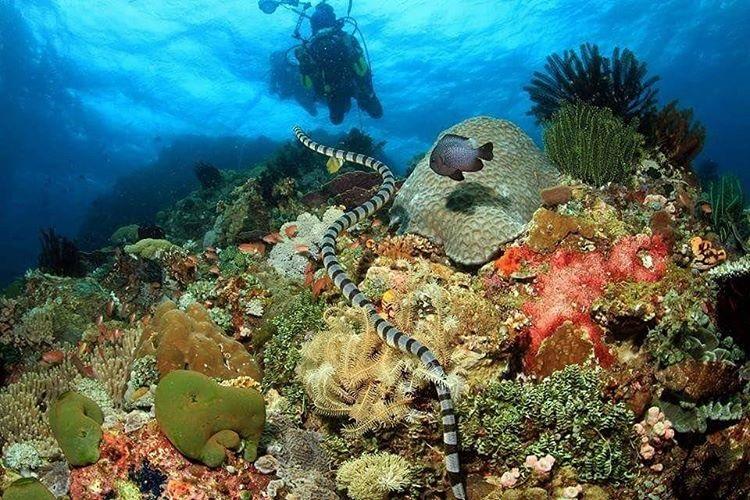 Anilao Batangas Diving