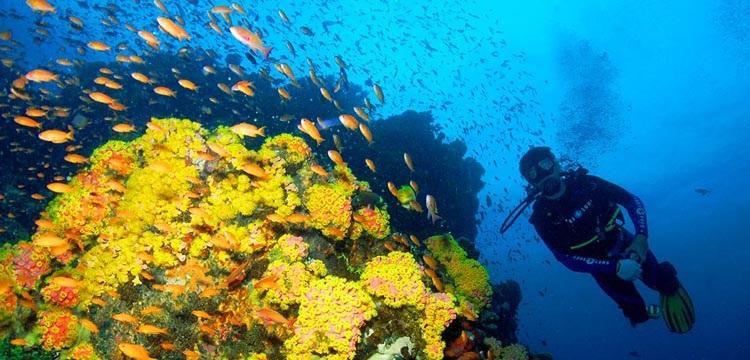 Puerto Galera Dive Sites