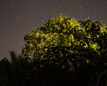 Unbelievable Glowing in the Dark Tree in Bohol