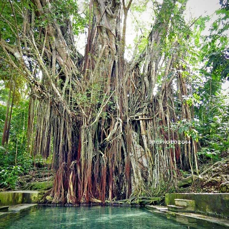 Old Balete Tree Siquijor