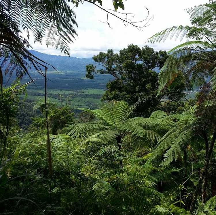 Mount Candalaga Compostela Valley