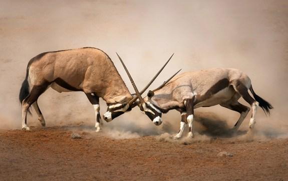 Antelopes of Malka