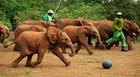 Sheldrick Elephant Orphanage