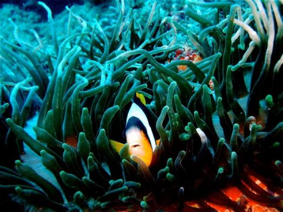 Watamu Marine National Park, source: watamu.biz