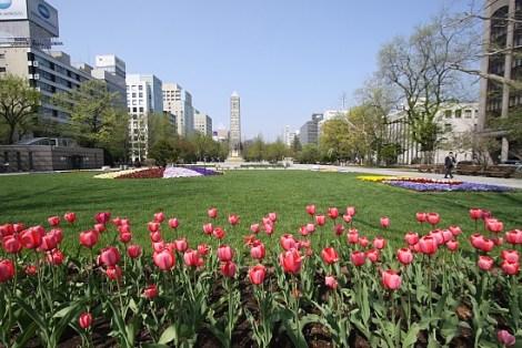 bunga lavender di tour jepang sapporo odori park