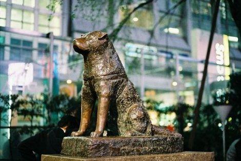 anjing-hachiko-di-shibuya