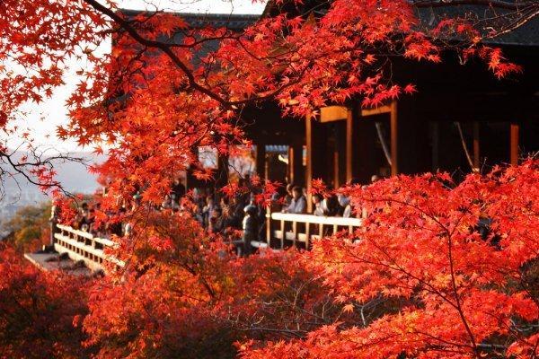 festival musim gugur