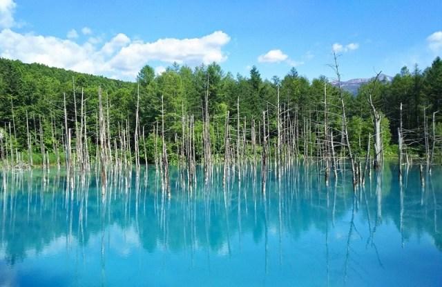 Shirogane Blue Pond Asahikawa Hokkaido Jepang