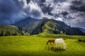 Murree and Shogran Standard Tour Package