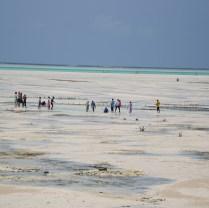 Zanzibar (11)