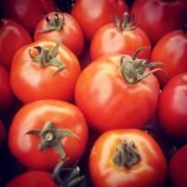 tomates-rouges