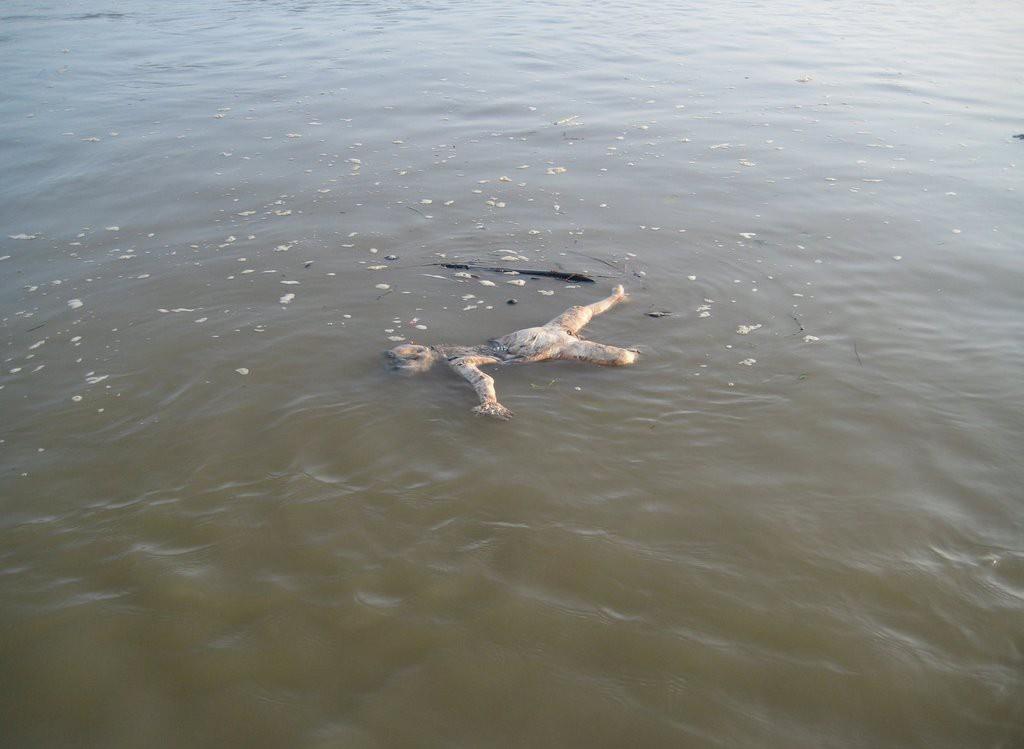 плывущие по реке тела