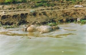 отходы жизнедеятельности Варанаси