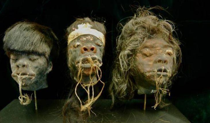 три сушеные головы
