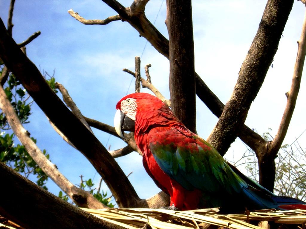 птицы канаймы