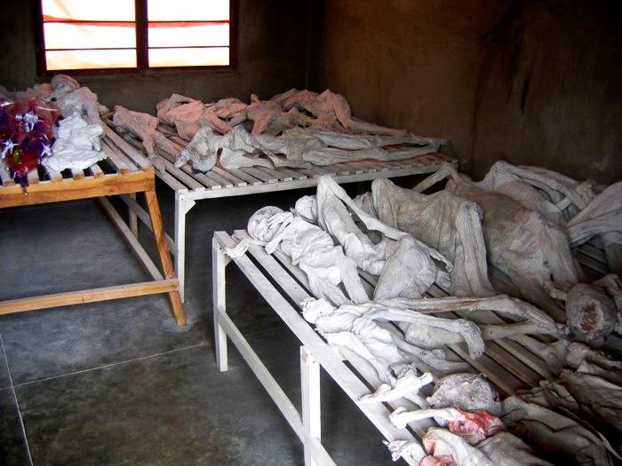 скелеты в музее
