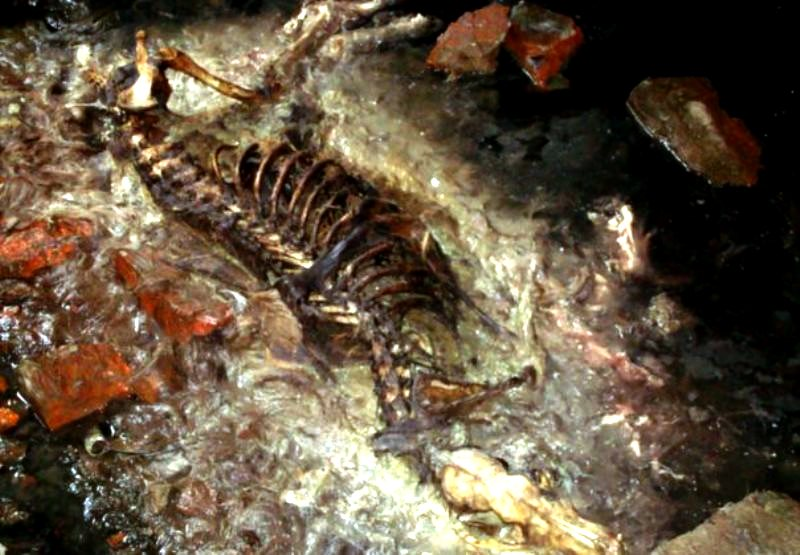 собачий скелет