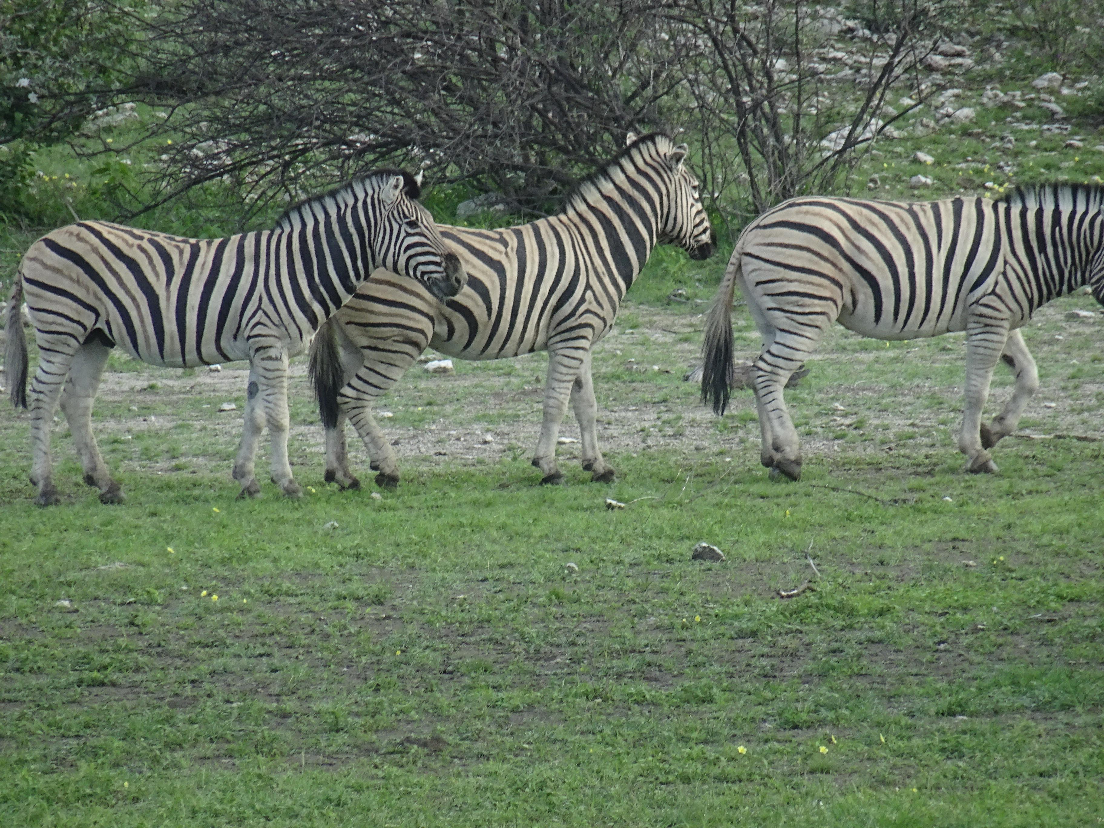 Paquetes turísticos a Kenia a Tanzania