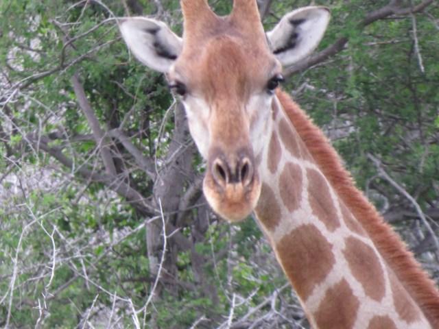 Paquetes turísticos a Kenia y Tanzania
