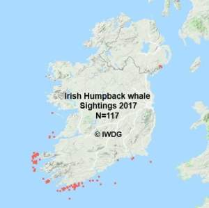 It's official: Ireland's Wild South Coast is THE place to see marine wildlife