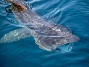 Summer 2018 Wildlife Highlights on Ireland's Wild South Coast