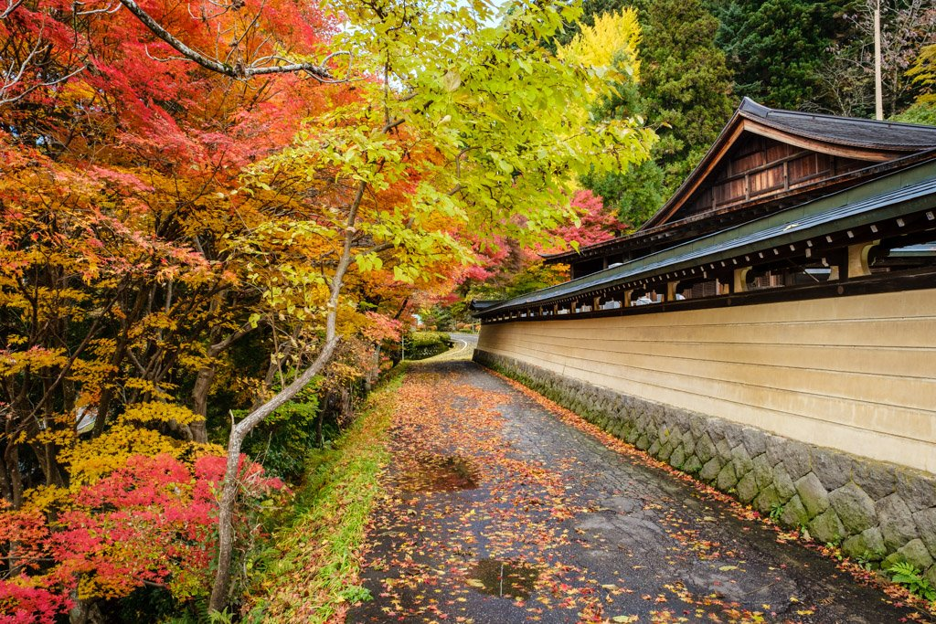 Fall colors in Japan