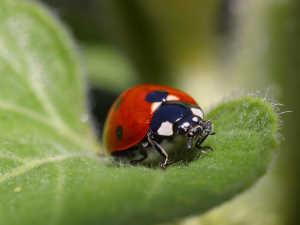 Ladybug in Ephesus