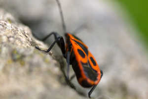 12 Insects Seen Around Ephesus Ancient City