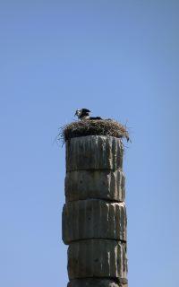 Stork on column of the Artemis Temple in Ephesus