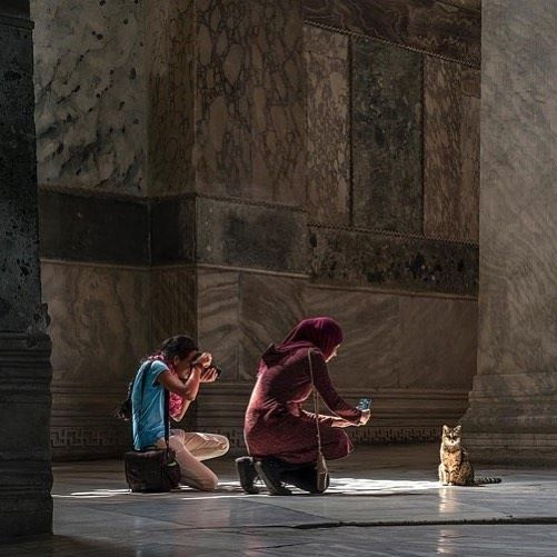 Gli-the-Hagia-Sophia-Cat-4