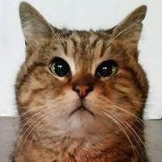 Gli the Hagia Sophia Cat Article