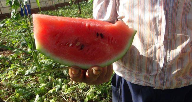 Turkish Watermelon