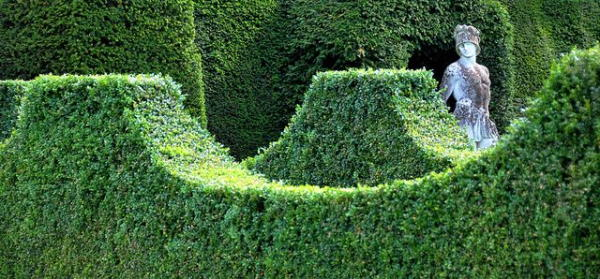 Boxwood was used in Roman Palaces just like we use it in modern garden decorations