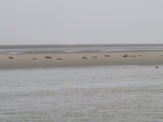 Baie de Somme Marquenterre animaux