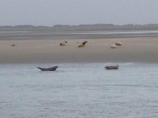 Baie de Somme Marquenterre phoques berck