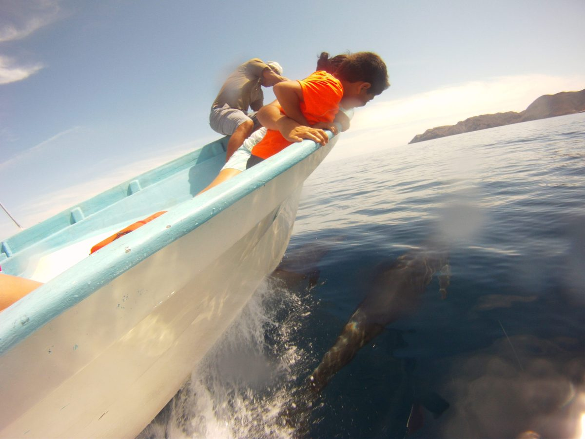 Dolphins Baja California Sea and Land Eco-tours
