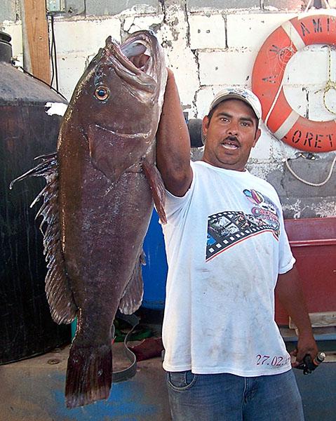 Sportfishing Loreto Baja California Sur- catch dog tooth snapper