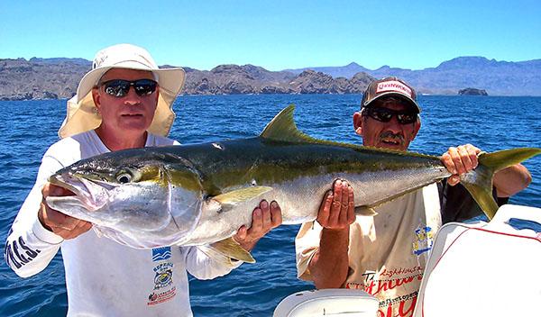 Yellowtail Sport Fishing