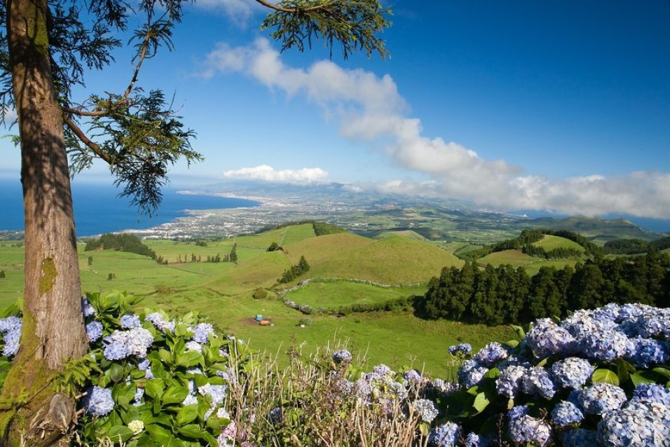 azores hiking trail through hydrangea forest