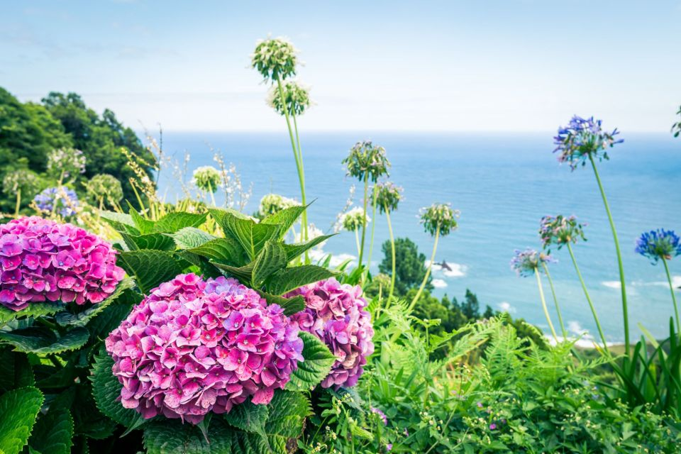 azores flowers in bloom sao miguel island